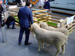 Sheep at Federation Square