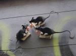 Kranky, Rats