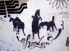 civil-freedom-horses